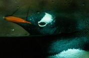 Hello Penguin! <3